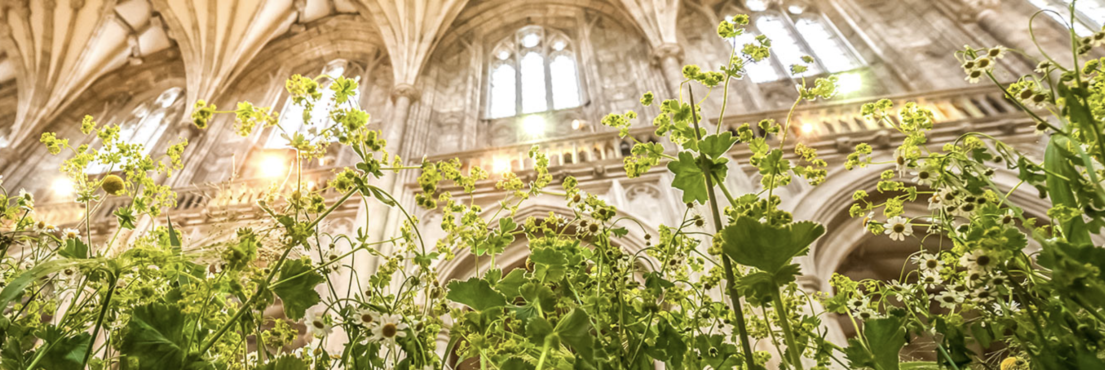 Greenery inside cathedral